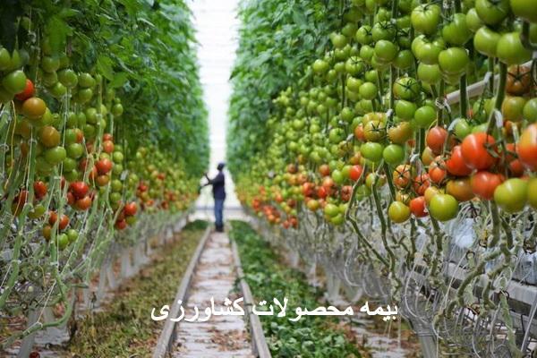 کاهش 15 درصدی بیمه محصولات کشاورزی در مهاباد