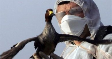 Monitoring the location of bird flu in Mahabad