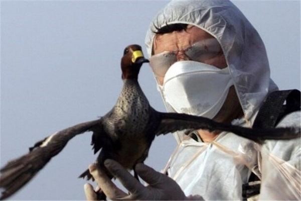 Monitoring the location of bird flu in Mahabad
