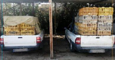 توقیف 9 خودروی حامل مرغ زنده در مهاباد