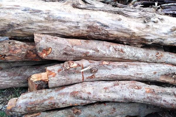 2 تن چوب قاچاق در مهاباد توقیف شد