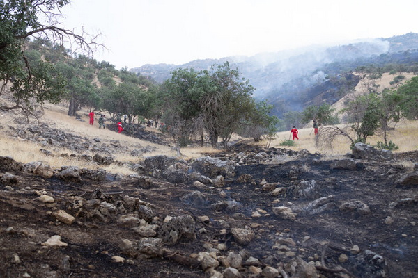 آتش سوزی زخمی بر تن طبیعت
