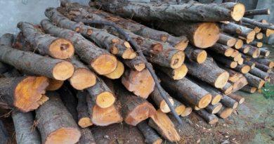 بیش از 30 تن چوب قاچاق در مهاباد کشف و ضبط شد