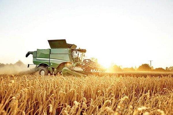 برداشت گندم از سطح مزارع سردشت آغاز شد