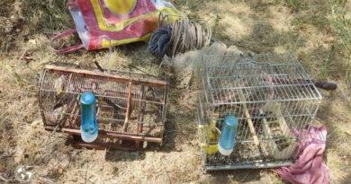 متخلف زنده گیری سهره طلایی در مهاباد دستگیر شد