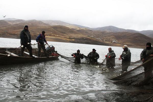 تولید سالانه 390 تن ماهی در مهاباد