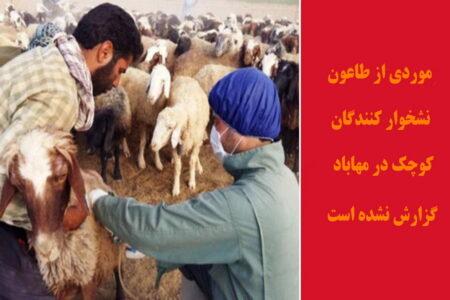 موردی از طاعون نشخوارکنندگان کوچک در مهاباد گزارش نشده است